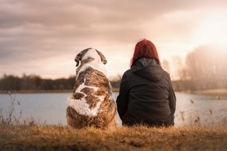 Tout ce qu'il faut retenir sur le chien de race Jack Russell Terrier