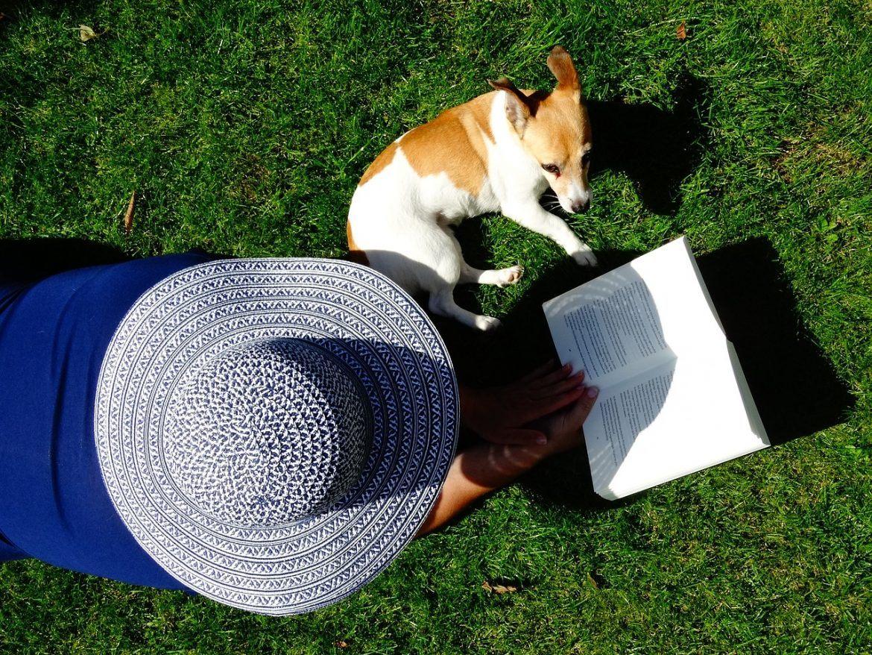 Particularités du Jack Russell Terrier